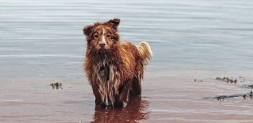 Gudog, el buscador de cuidadores de perros