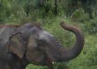 Sri Lanka, un vergel tropical en el Indico
